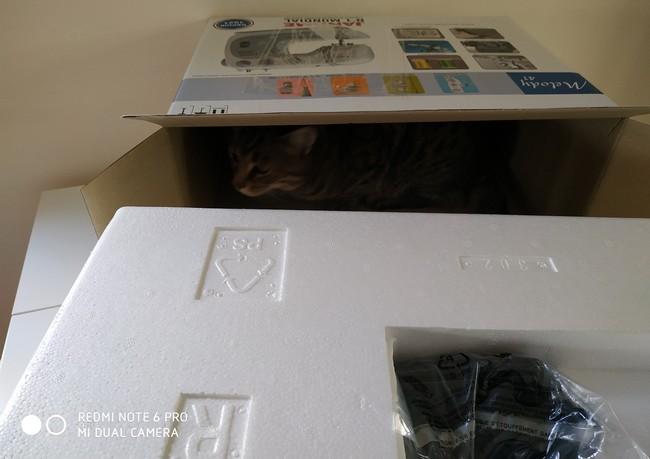 Boîte ouverte avec un chat à l'intérieur
